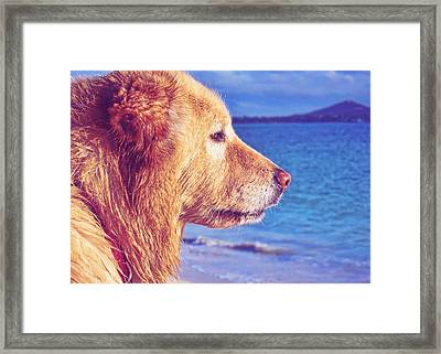 Beach Buddy  Framed Print by JAMART Photography