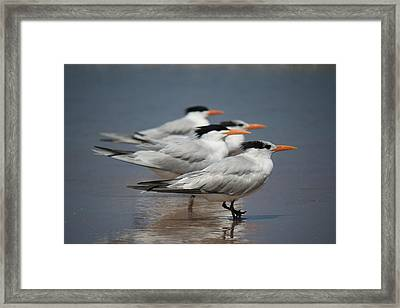 Beach Buds Framed Print
