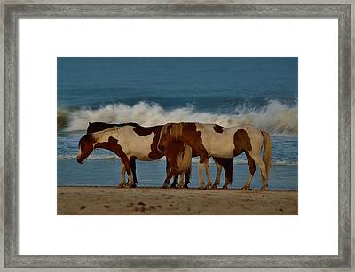 Beach Bum Ponies Framed Print