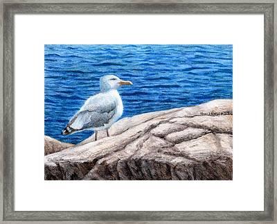 Beach Bum Framed Print by Shana Rowe Jackson