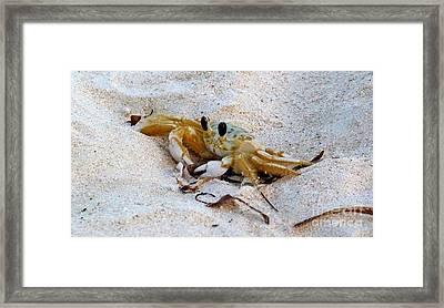 Beach Crab Framed Print