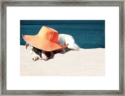 Framed Print featuring the photograph Beach Day For Bubba by Shelley Neff