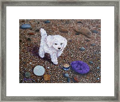 Beach Discoveries Framed Print by Laura Iverson