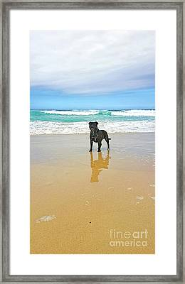 Framed Print featuring the photograph Beach Dog And Reflection By Kaye Menner by Kaye Menner