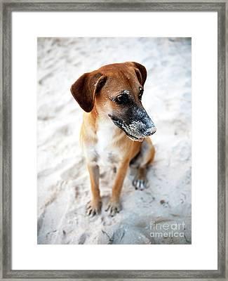Beach Dog Framed Print by John Rizzuto