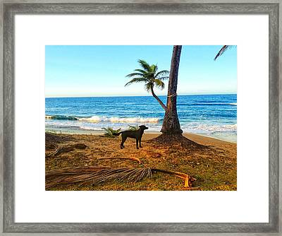 Beach Dog  Framed Print