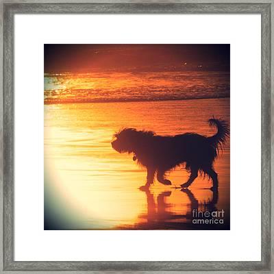 Beach Dog Framed Print by Paul Topp