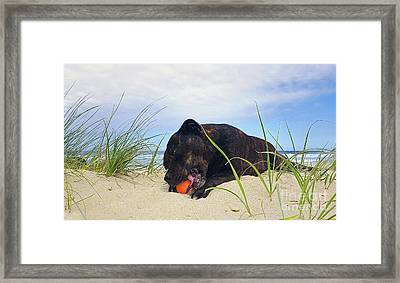 Framed Print featuring the photograph Beach Dog - Rest Time By Kaye Menner by Kaye Menner