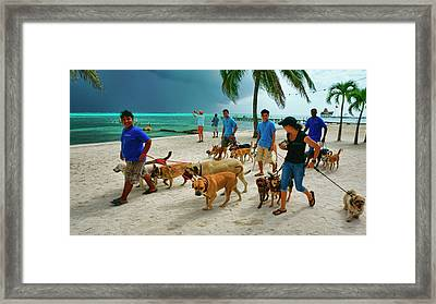Beach Dog Walkers On Ambergris Caye, Belize Framed Print