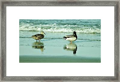 Beach Ducks Framed Print