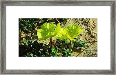 Beach Evening Primrose Framed Print