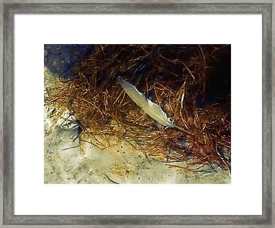 Beach Feather Framed Print by Robert Bissett