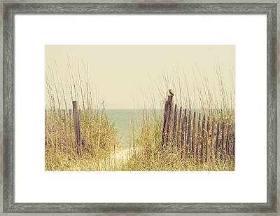 Beach Fence In Grassy Dune South Carolina Framed Print by Stephanie McDowell