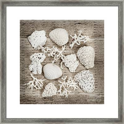 Beach Finds Framed Print by Elena Elisseeva