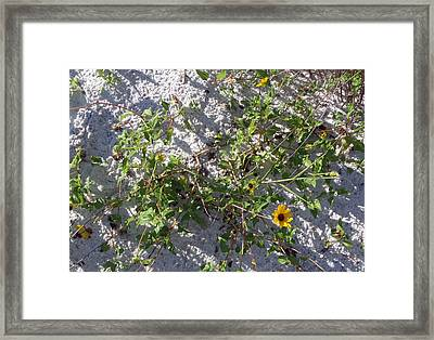 Beach Flora Framed Print by Pepsi Freund
