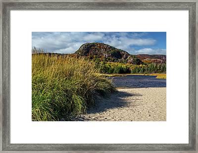 Beach Grass Framed Print by Brent L Ander