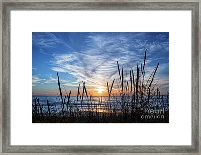 Beach Grass Framed Print by Delphimages Photo Creations