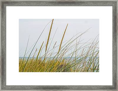 Framed Print featuring the photograph Beach Grass by Kendall McKernon