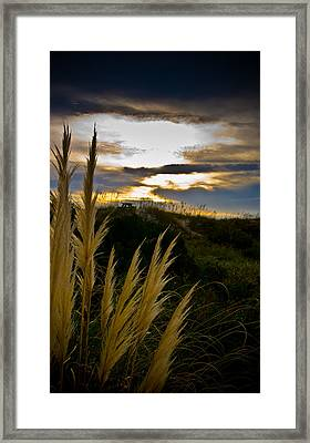 Beach Grass Framed Print by Patrick  Flynn