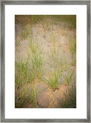 Beach Grasses Number 10 Framed Print