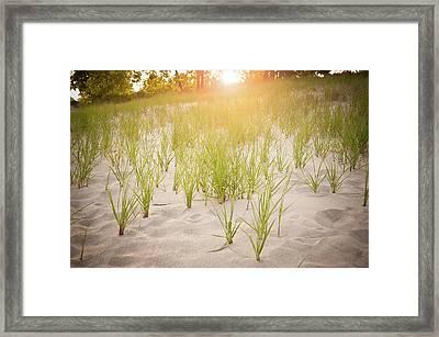 Beach Grasses Number 3 Framed Print