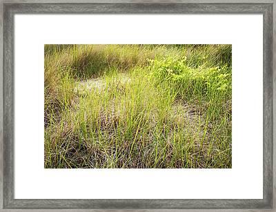 Beach Grasses Number 8 Framed Print