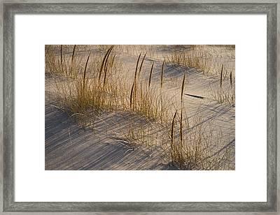 Beach Grasses Framed Print