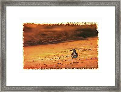 Beach Gull Framed Print