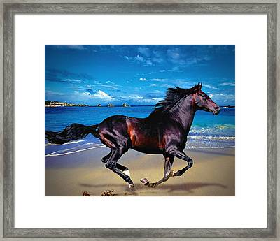 Beach Horse Framed Print