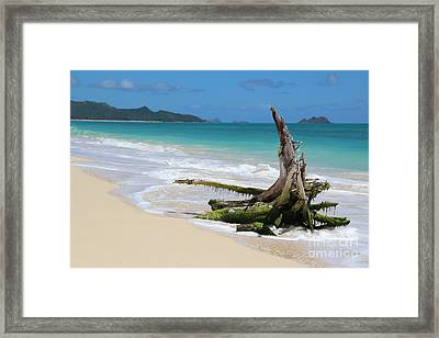 Beach In Hawaii Framed Print by Anthony Jones