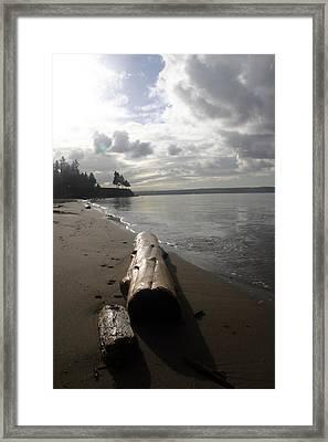 Beach Logs Framed Print by Mary Haber