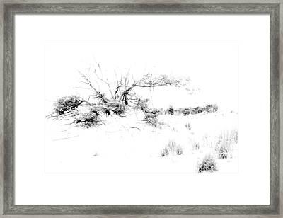 Beach Morning Lone Tree On Dune Framed Print by Randy Steele