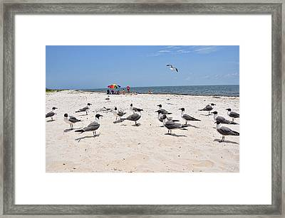 Framed Print featuring the photograph Beach Party by Jan Amiss Photography