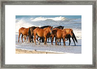 Beach Ponies Framed Print