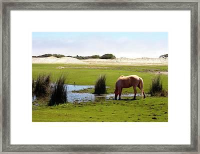 Beach Pony Framed Print by Alan Hausenflock