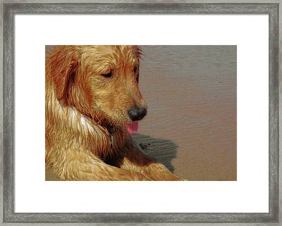 Beach Pup Framed Print by JAMART Photography