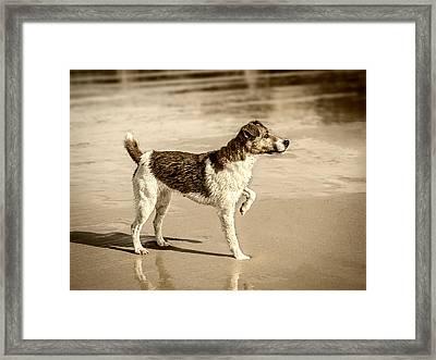 Beach Ready Framed Print