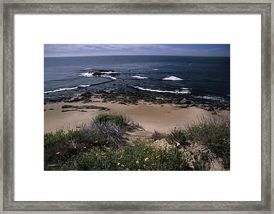 Beach Reef Point Wildflowers Framed Print