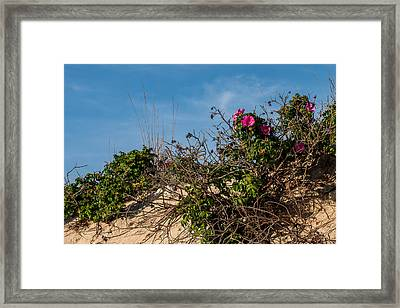 Beach Roses On Dune Jersey Shore Framed Print by Terry DeLuco