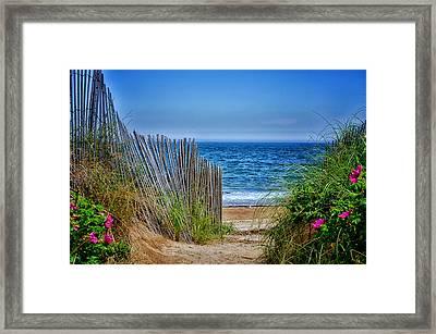 Beach Roses Framed Print by Tricia Marchlik