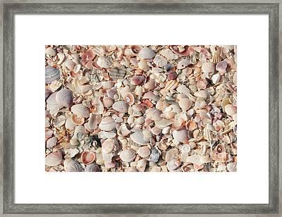 Beach Seashells Framed Print