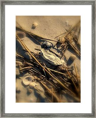 Beach Still Life Framed Print by Susanne Van Hulst