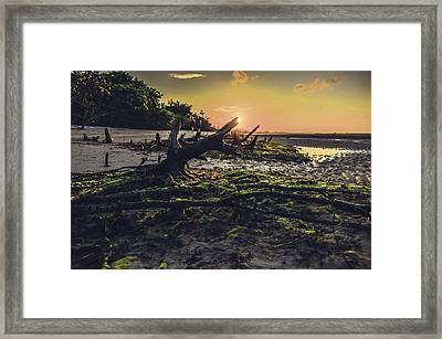 Beach Stumps Framed Print by Michael Frizzell
