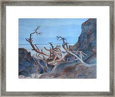 Beach Tangle Framed Print by Jenny Armitage