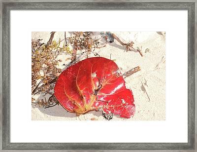 Beach Treasures 1 Framed Print