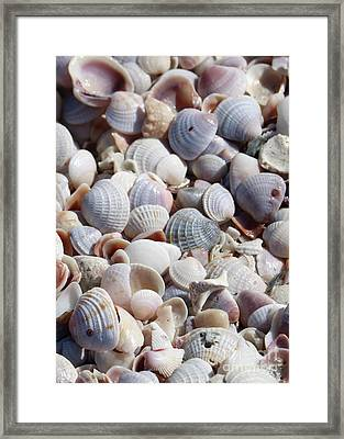 Beach Treasures - Seashells Framed Print