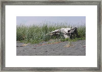 Beach Tree Framed Print by Frederic Durville