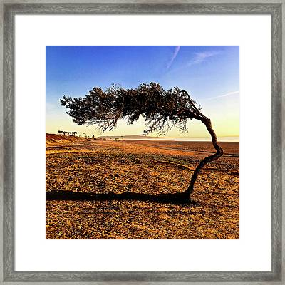 Beach Tree Framed Print by Howard Dando