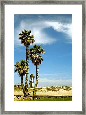 Beach View With Palms And Birds Framed Print by Ben and Raisa Gertsberg