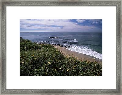 Beach Waves And Wildflowers Framed Print by Don Kreuter